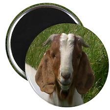 Goats Magnet