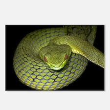 Green Tree Snake, 8 Postcards