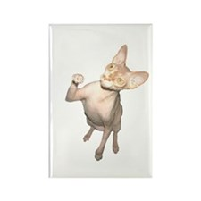 Hairless Cat Rectangle Magnet