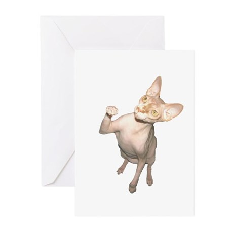 Hairless Cat Greeting Cards (Pk of 10)