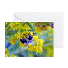 Bee & Yellow Dandelions Greeting Cards (Package of
