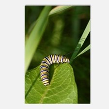 Monarch Postcards (Package of 8)