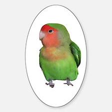 Peach-faced Lovebird Oval Decal