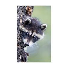 Raccoon Rectangle Decal