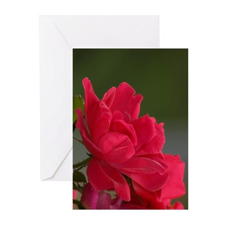 Birthday Rose (Pk of 20)