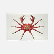 Big Crab Rectangle Magnet