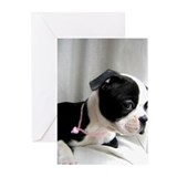 Boston terrier Greeting Cards (10 Pack)