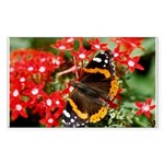 Red Admiral Butterfly Rectangle Sticker 50 pk)