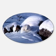 Arctic Fox Oval Decal
