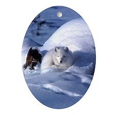 Arctic Fox Oval Ornament