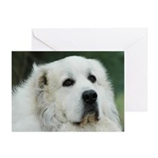 Cute Pyrenees dog breed Greeting Cards (Pk of 20)