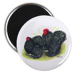 Black Frizzle Cochins2 Magnet