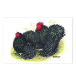 Black Frizzle Cochins2 Postcards (Package of 8)