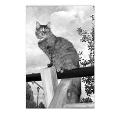 Cat on Swingset Postcards (Package of 8)