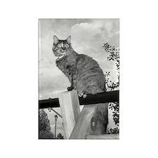 Cat on Swingset Rectangle Magnet