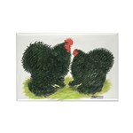 Black Frizzle Cochins Rectangle Magnet (10 pack)
