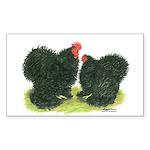 Black Frizzle Cochins Rectangle Sticker