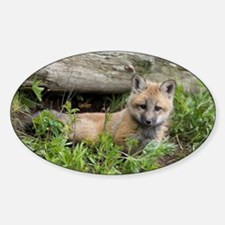 Red Fox Kit Oval Decal