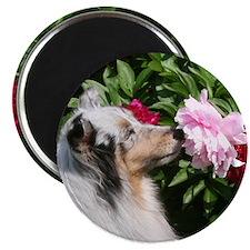 Sheltie Flower Magnet