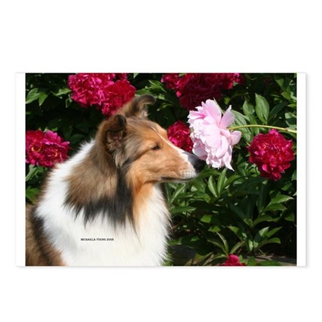 Sable Flower Postcards (Package of 8)