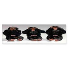 3 Monkies Bumper Bumper Sticker