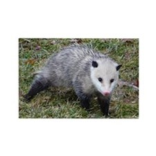 Opossum Rectangle Magnet