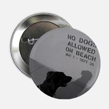 Black Lab No Dogs Allowed Button