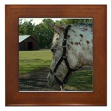 Appaloosa Horse Framed Tile