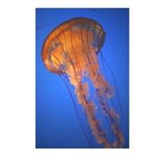 gifts! jellyfish Postcards (Package of 8)