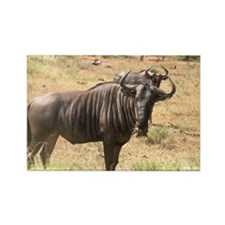 Wildebeests Rectangle Magnet