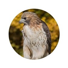 "Red Tail Hawk 3.5"" Button"