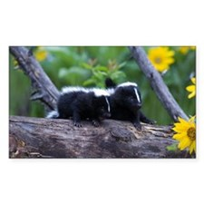 Skunk Rectangle Decal