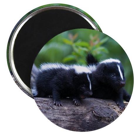 Skunk Magnet