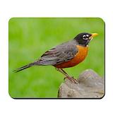 Robin bird Mouse Pads