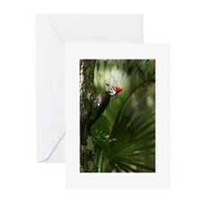 Woodpecker Note Cards(Pk of 10)