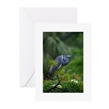 Tricolor in Rain Note Cards (Pk of 10)