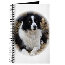 Poe the Border Collie Journal