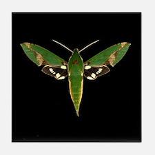 Chiron Sphinx Moth Tile Coaster