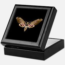 Ypsilon Sphinx Moth Keepsake Box