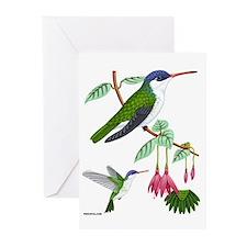 Greeting Cards (6) Violet-crowned Hummingbird