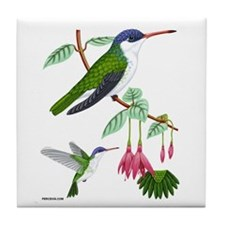 Tile Coaster Violet-crowned Hummingbird