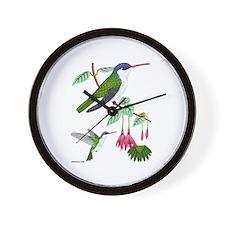 Wall Clock Violet-crowned Hummingbird
