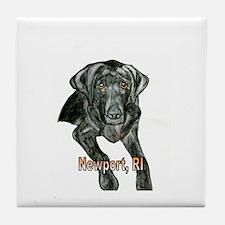 Black Labrador Newport, RI Tile Coaster