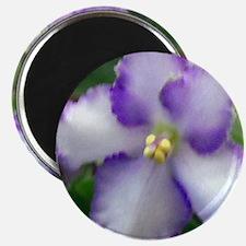 African Violet Magnet