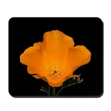 Golden Poppy (macro) Mousepad