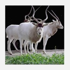 Addax Herd Tile Coaster