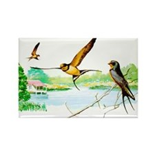 Barn Swallow Rectangle Magnet