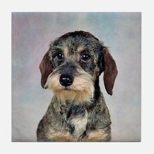 Wirehaired Dachshund Tile Coaster