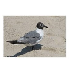 Jersey Shore Seagull Postcards (Package of 8)