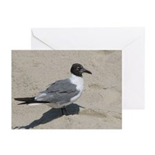 Jersey Shore Seagull Greeting Cards (Pk of 20)